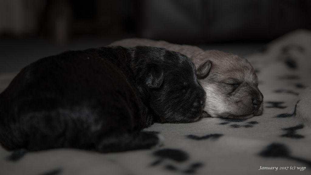 January2017-puppylove-24