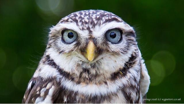 April owls